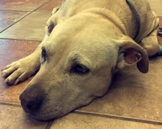 L'ultimo giorno di un cane malato prima di essere soppresso. Straziante ma meraviglioso
