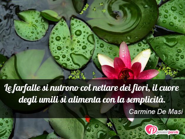 Immagine Con Frase Saggezza Di Carmine De Masi Le Farfalle