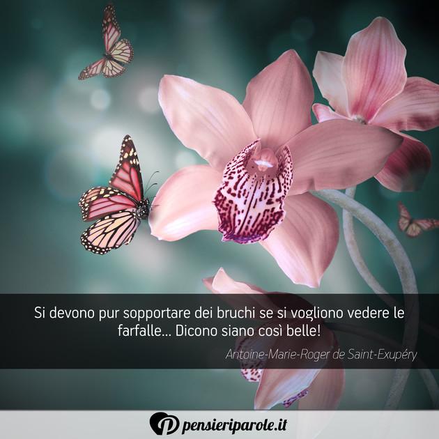 Immagini Di Farfalle Con Frasi